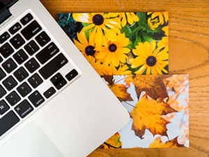 Laptop with spring and autumn
